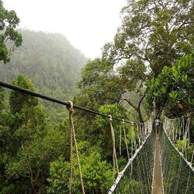 taman negara hanging bridge